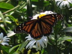 Hillsdale House Inn Hosts Butterfly Workshop