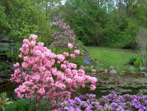 Annapolis Royal Historic Gardens ~ Trish Fry